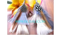 New Feather Earrings