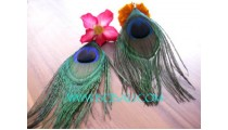 Peacock Feather Earrings New